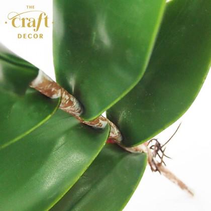 Dendrobium Orchid Leaves Bush