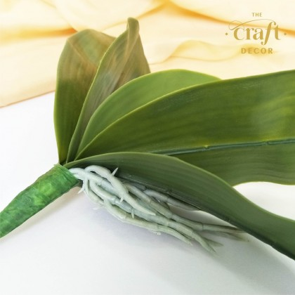 Butterfly Orchid Leaf
