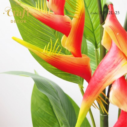 Heliconia Plant With Pot