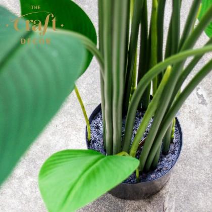 Premium Skybird Plant With Pot
