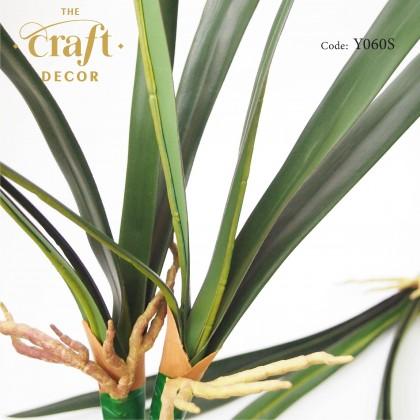 Cymbidium Orchid Leaf