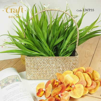 Orchid Grass