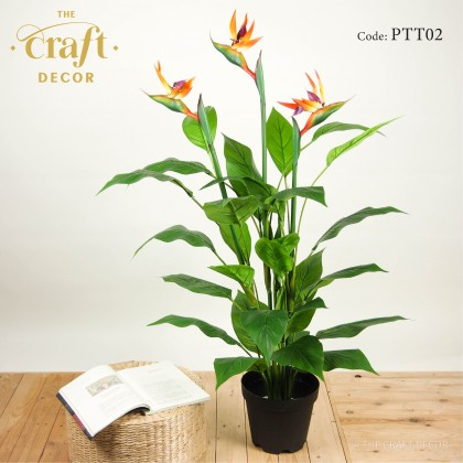 Bird of Paradise Plant With Pot