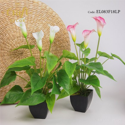 Calla Lily Flower With Pot