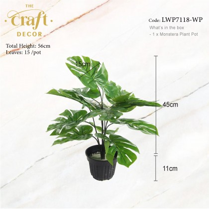 Monstera Plant With Pot